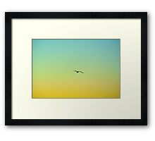 Seagull Under the Sun Framed Print