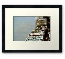 The Claw!!! Framed Print