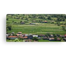 Rice Fields Canvas Print