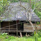 Typical house in the jungle, Iquitos, Peru by juan jose Gabaldon