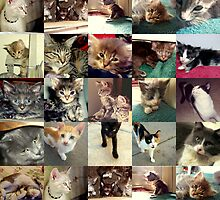 Kitty Collage by down23