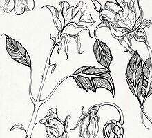 botanical floral line drawing black and white by foxandbadger
