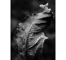 Flora study 3 Photographic Print