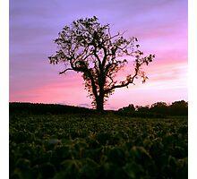 Summer Tree Photographic Print