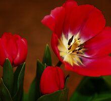 Spring's Herald by Joan  Hoffman