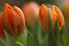 Flaming Tulips by AnnieSnel
