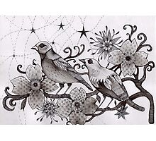 moonlight birds Photographic Print