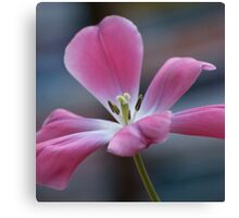 Pink And Playful Canvas Print