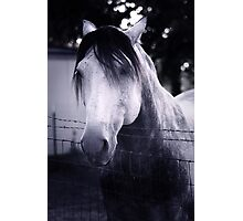 White Whisperer Photographic Print
