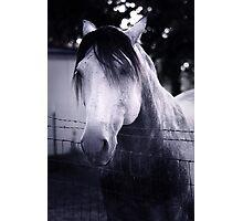 White Whisperer Photographic Print
