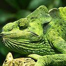 Iguana by Robert Kendall