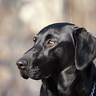 My Dog, Emma is a Black Lab. by Brian Dodd
