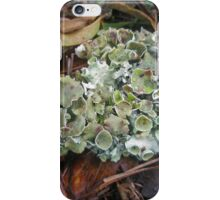 Lichen on Dead Branch Outer Banks North Carolina USA iPhone Case/Skin