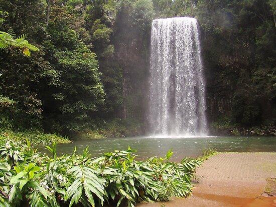Millaa Millaa Falls by Peace Mitchell