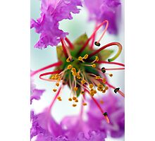 Explosion of colour Photographic Print
