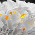 Yellow Spot by MarianaEwa