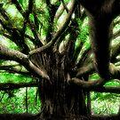 Maui Banyan by Philip James Filia
