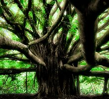 Maui Banyan by Philip James Filia