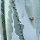 Century Plant and Stinkbug by May Lattanzio