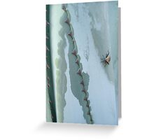 Century Plant and Stinkbug Greeting Card