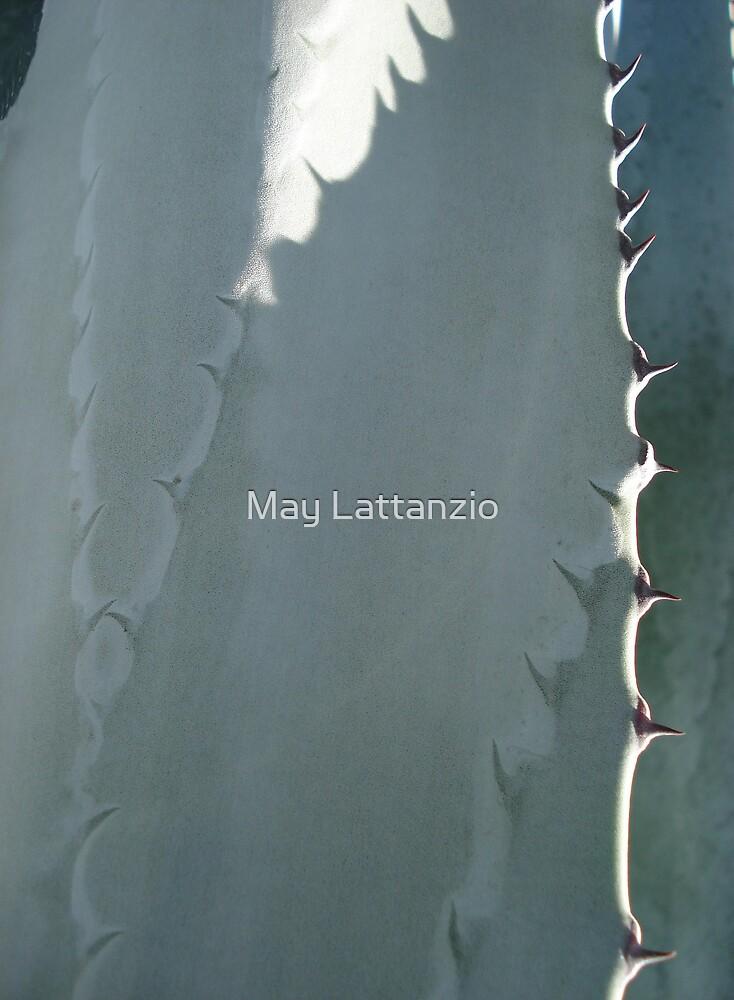 Century Plant - Sun and Shadows by May Lattanzio