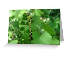 Pondhawk - Dragonfly Greeting Card