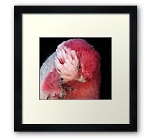 Not Now My Hair's a Mess Framed Print