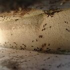 The Ants Go Marching One by One by 2mole