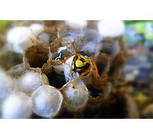 Well, Hello there!! Photographic Print