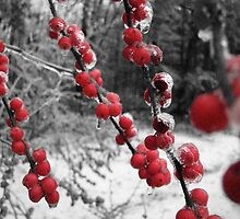 Winter Berries 2  by 08amd26