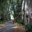 Fig Tree Lane by sedge808