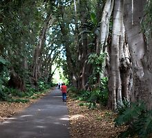 Fig Tree Lane by sedge808
