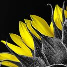 Selective Colour Sunflower by GayeLaunder Photography