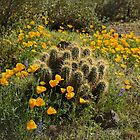 Springtime Splendor on the Desert Floor by Lucinda Walter