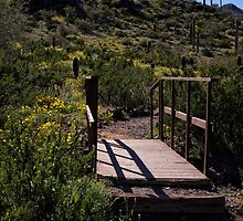 Cross The Bridge And Follow The Path by Lucinda Walter