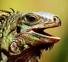 The Iguana by express-oh