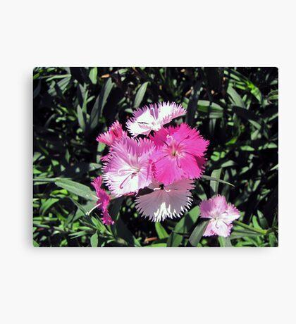 Precious in Pink Canvas Print