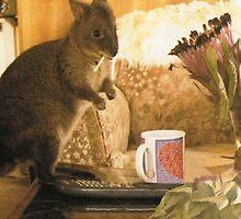 Joe my Orhpan Wallaby by cradlemountain