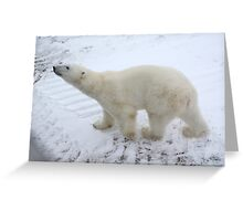 Inquisitive Polar Bear Greeting Card