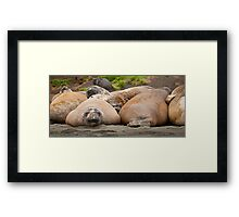 Lazing with Friends Framed Print