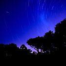Back yard Stars by bettyb