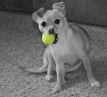 My Ball!! by Cheri Perry