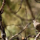 Sparrow on a Stick by Greg Birkett
