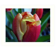 Tulip Macro Art Print