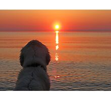My Golden Retriever Ditte enjoys the sunset  Photographic Print