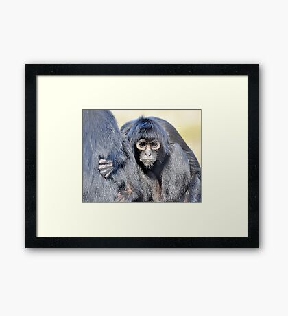Young Adult - Spider Monkey Framed Print