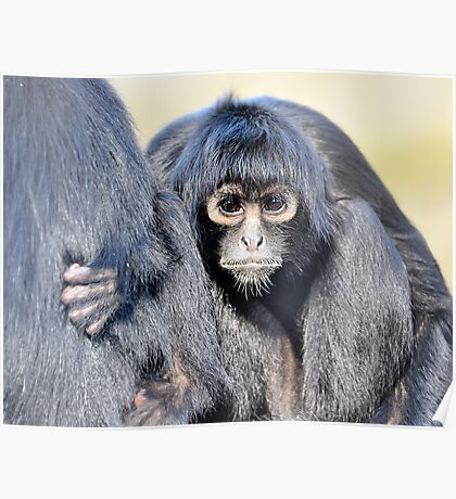 Young Adult - Spider Monkey Poster