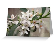 Little Blooms  Greeting Card