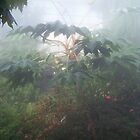 Rain Forest by Dennis  Stanton