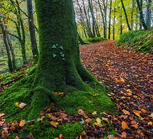 Autumn Forest Walk by Ian Mitchell